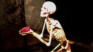 ЯМ: Анатомический стрим ☠️ Exhibition BODY WORLDS