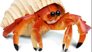 Meeting the Crab Boss