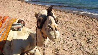 ЯM: Tour of Egypt. Day 2 🤩 Part 2