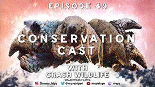 [PANGOLIN] CONSERVATION CAST E. 49 with Kelsey Prediger for CRASH Wildlife