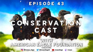 CONSERVATION CAST E. 43 with American Eagle Foundation for Vulture Conservation