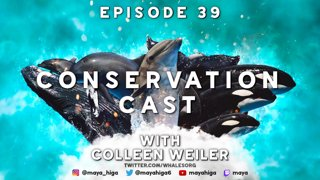 CONSERVATION CAST E. 39 with Colleen Weiler for Whale and Dolphin Conservation