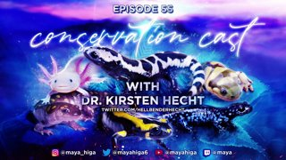 CONSERVATION CAST ep. 55 with Dr. Kirsten Hecht for Foundation for the Conservation of Salamanders