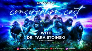 Highlight: CONSERVATION CAST ep. 61 with Dr. Tara Stoinski for the Dian Fossey Gorilla Fund