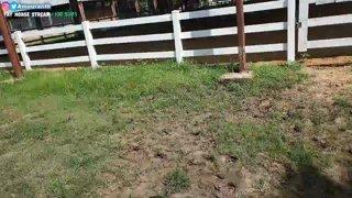 Ranch Stream July 18