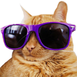 CoolCat emoticon large resolution download link