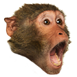 GTChimp emote download link