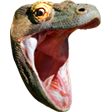 KomodoHype emoticon large resolution download link