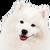 View DoggoNoProbbo's Profile