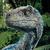 View Ravenclaw_Raptor's Profile
