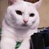 meison_cat