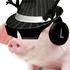 View PigsForL1fe's Profile