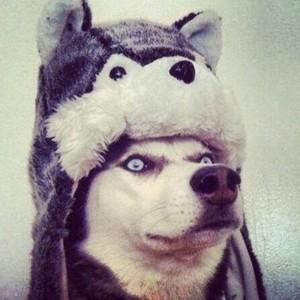 WolfOW