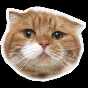 surinoelcats's Avatar