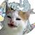 avatar for latenightretro
