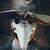 View Gentle_Sword's Profile