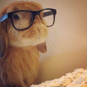 View rabbit_in_glasses's Profile