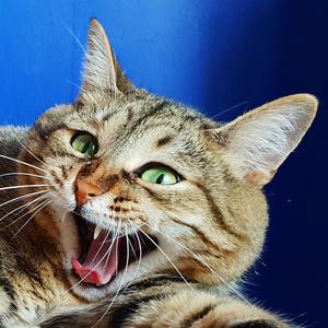 Хозяева котов на 17% чаще являются обладателями ученой степени