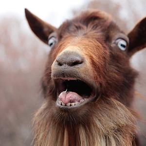 GoaT_NOOB