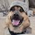 View DesertDog's Profile