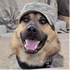 View DesertDog's Profile