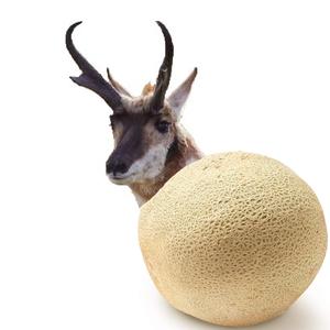 View MelonOnTheGrill's Profile