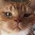 avatar for elokratz