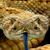 Avatar for rattlesnake3163