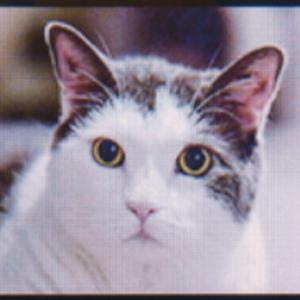View Jollysandwich's Profile