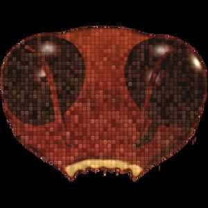 Roach_tm Logo