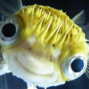 Fish_civ