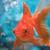 View SpaceGoldfish122's Profile
