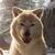 View Sea_Side_Pets's Profile