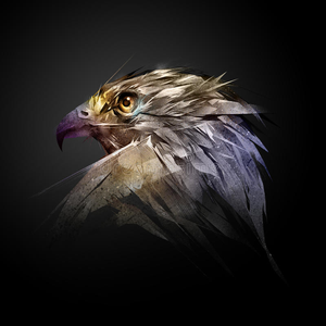 View Subjecthawk66's Profile