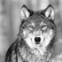 View WolfNationsBR's Profile