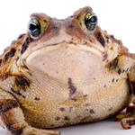 View floppytoad64's Profile