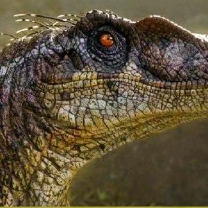 Dat_Raptor