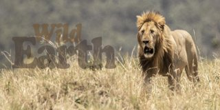 Profile banner for wildearth
