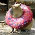 View gigantic_capybara's Profile