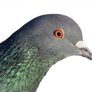 View ekhothepigeon's Profile