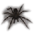 View Netspider's Profile