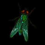 View stats for IIGADFLYII