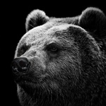 View stats for bear_cl4w