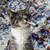 View sum_catnip's Profile