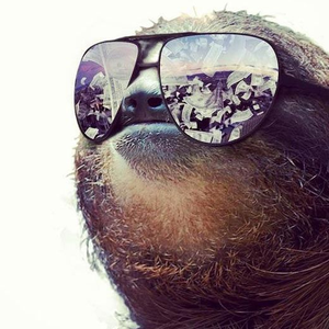 Slothfall Logo