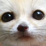 View ObraTwitch's Profile