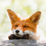 View Vorpal_theFox's Profile