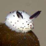 View lilypuree's Profile