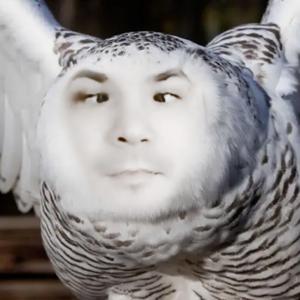 craazy_owl