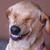avatar for dawgdebik
